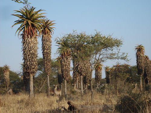 Polokwane Game Reserve