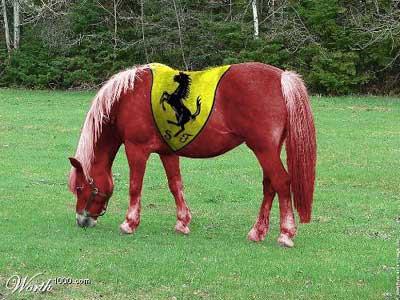 cavallo ferrari